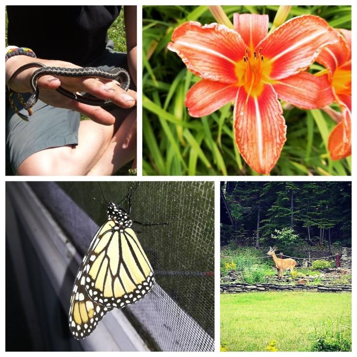 faune et flore canada